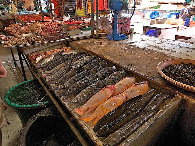 Ko Samui Markt Fische