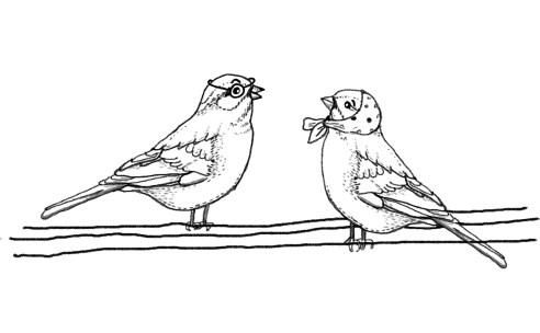 Sparrows1