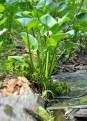 Quaking Bog 10