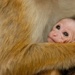 Why Disneynature Films Are More Than Just Amazing #MonkeyKingdomEvent