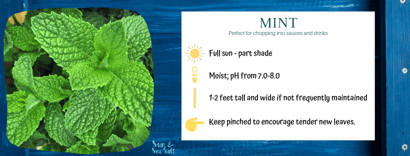 How to grow mint in an indoor herb garden