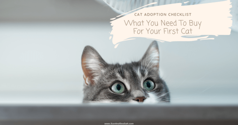 Cat Adoption Checklist | What You Need For Your First Cat