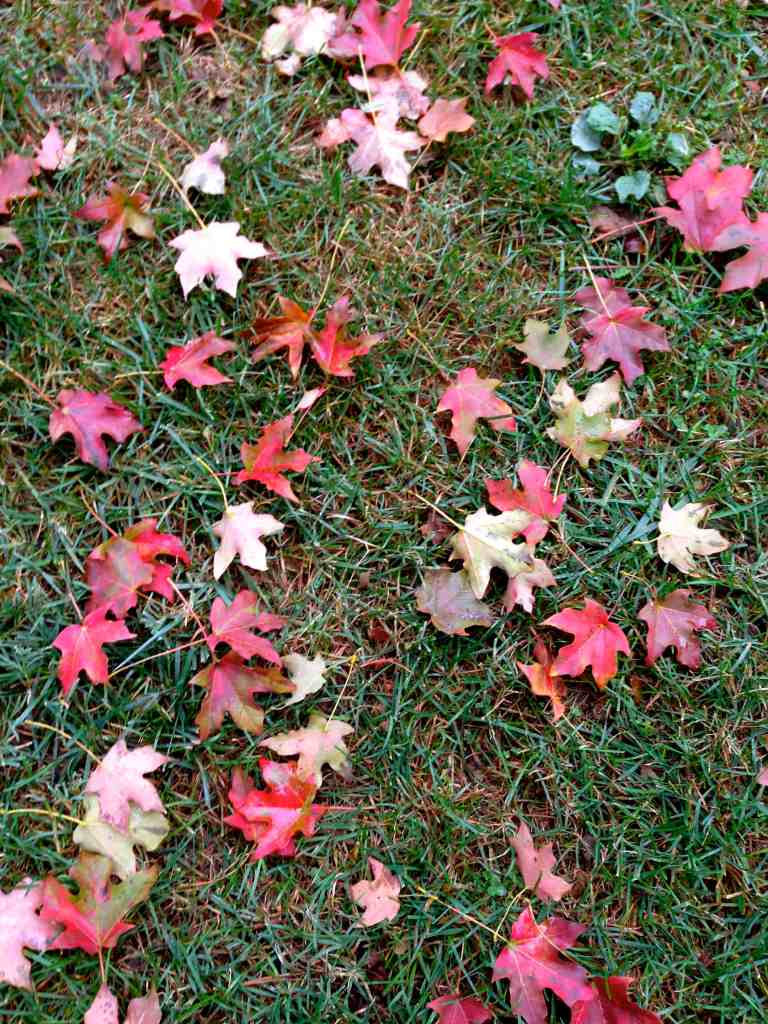 DC Fall Leaves via @sunburntsaver