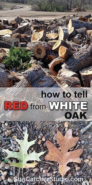 Between Oak Oak And White Red Difference