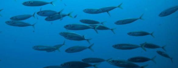 fisk2