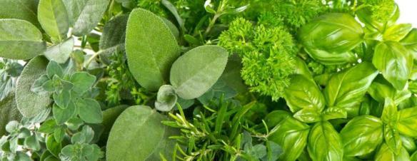 herbs2