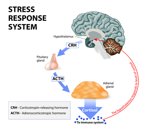 forhøjet kortisol
