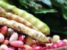 Brug de sunde bælgfrugter i din sommermad