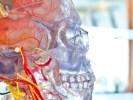 Sæt gang i hjernens eget medicinskab med kognitiv tænkning
