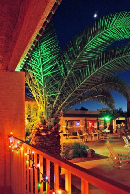 Night time palm
