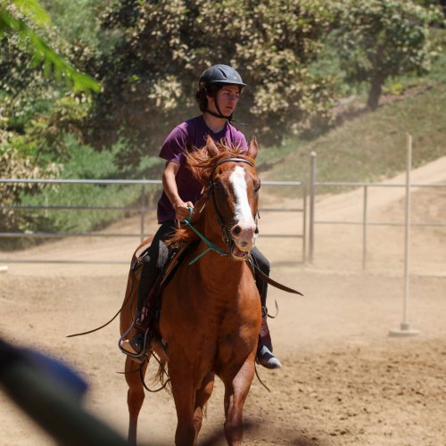 Horse Leasing San Diego