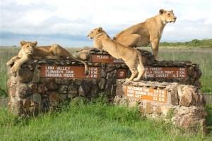 Nairobi Excursions - Nairobi National Park