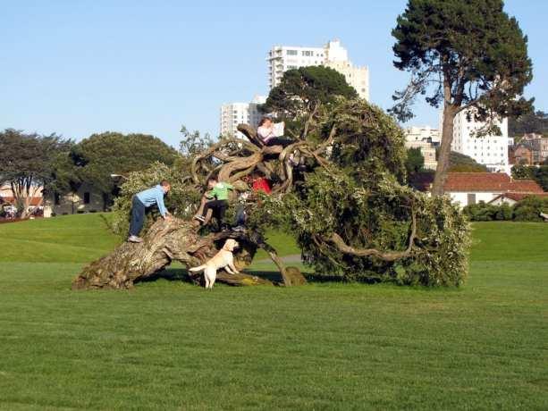Dicas de São Francisco: passeio de bicicleta