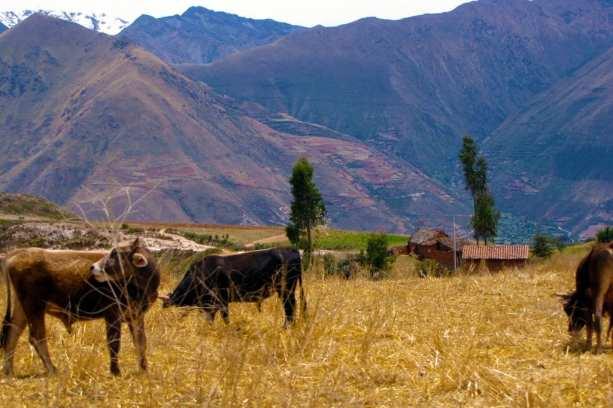 Quantos dias ficar no Peru - Em algum lugar do Valle Sagrado