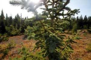 Heli Yoga - sol e pinheiros
