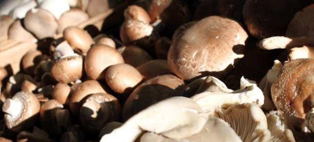 Mercados em Montreal - cogumelo