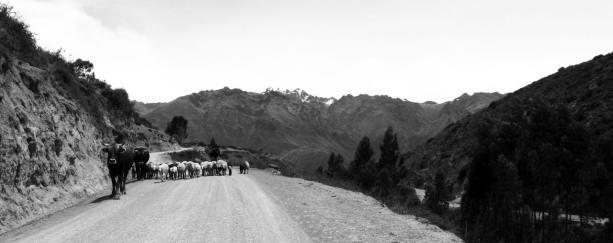 Valle Sagrado - pastoreio em estradas de terra