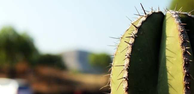 Como ir a Teotihuacán - Cacto