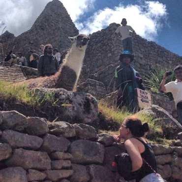 Viagem ao Peru pela Giovanna - Machu Picchu e Lhama