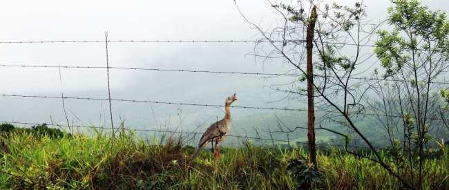 Serra da Canastra - A natureza veio nos visitar :)