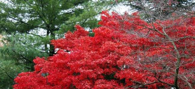 O que fazer em Annapolis - Cores do outono