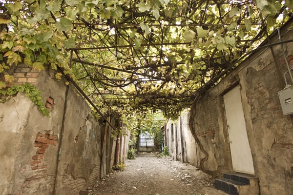 tbilisi cidade velha parreiral