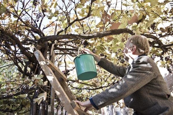 tbilisi cidade velha uvas senhor