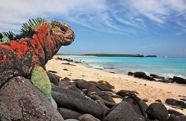 Galápagos, o patrimônio #1, mas não o primeiro   Foto: blinking idiot (CC BY-ND 2.0)