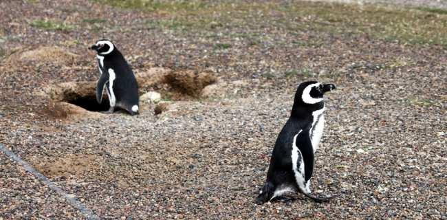 Provincia de Chubut - avistando pinguins 1