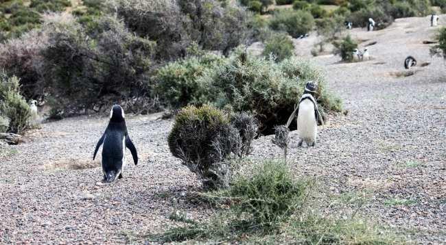 Provincia de Chubut - avistando pinguins 2