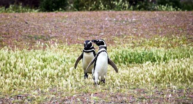 Provincia de Chubut - avistando pinguins 4