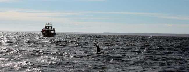 Provincia de Chubut - avistando baleias 1