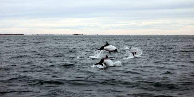 Provincia de Chubut - avistando toninas 2