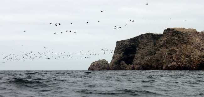 Peru: Ilhas Ballestas e Reserva Nacional de Paracas - 6