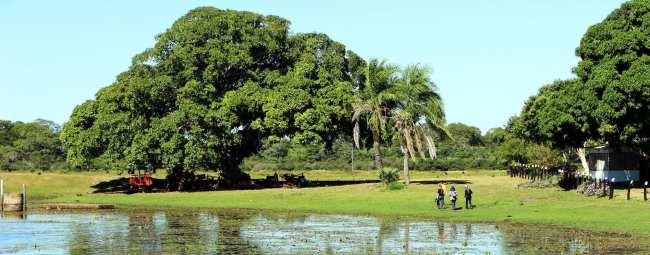 ABC do Pantanal - Fazenda São João 2