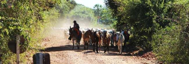 ABC do Pantanal - Comitiva na Estrada Parque