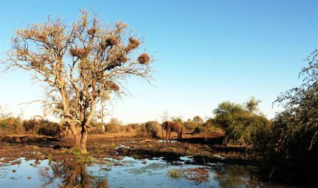 Como é fazer um safári na África do Sul - Madikwe Game Reserve 2
