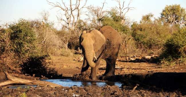 Como é fazer um safári na África do Sul - Madikwe Game Reserve 3