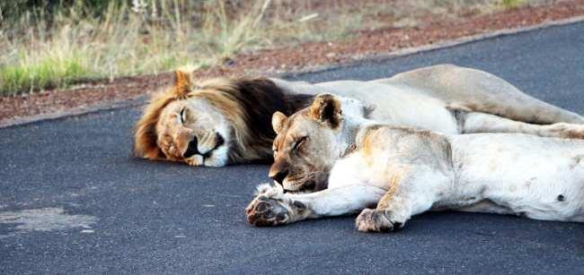 Como é fazer um safári na África do Sul - Madikwe Game Reserve 7