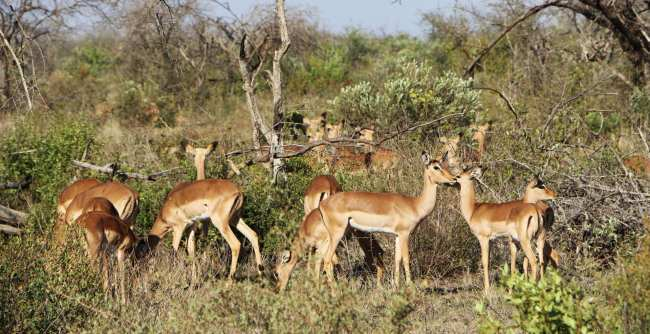 Como é fazer um safári na África do Sul - Madikwe Game Reserve 13