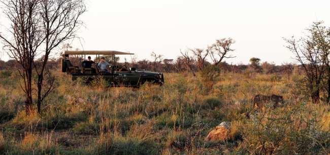 Como é fazer um safári na África do Sul - Madikwe Game Reserve 19