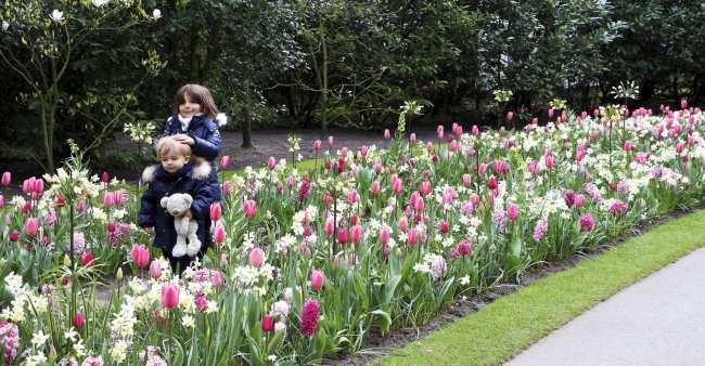 Como ir ao Keukenhof na holanda - jardim de tulipas perto de Amsterdã - 28