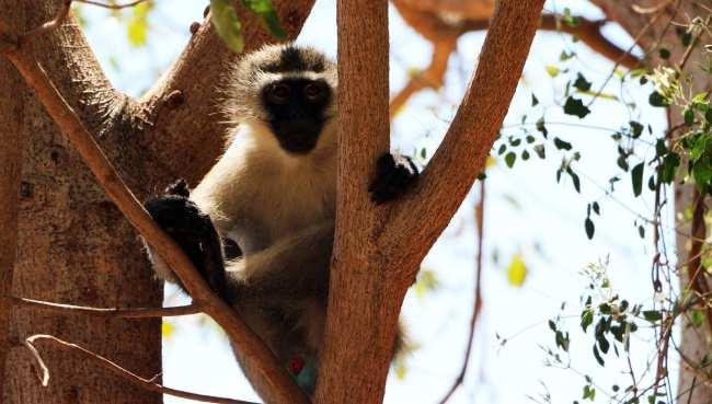 Kruger Park, safári pela África do Sul - 12