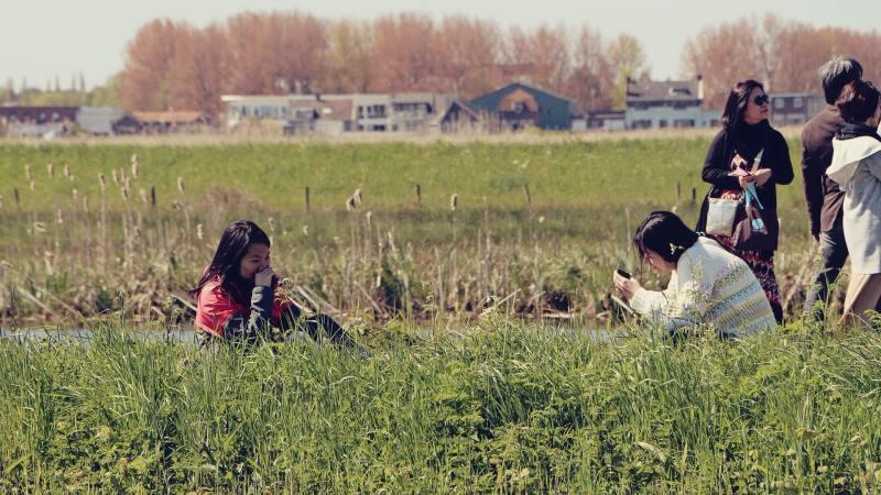 Como chegar em Kinderdijk - os primeiros moinhos da Holanda - 02