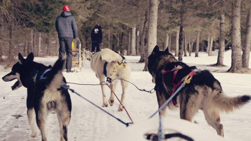 Mont Tremblant: uma estação de esqui no Canadá - 07
