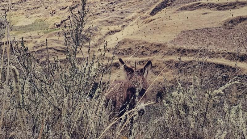 Trilhas pelo Peru - Mountain Loges - 0D:\fotos para posts\Mountain Lodges - 11