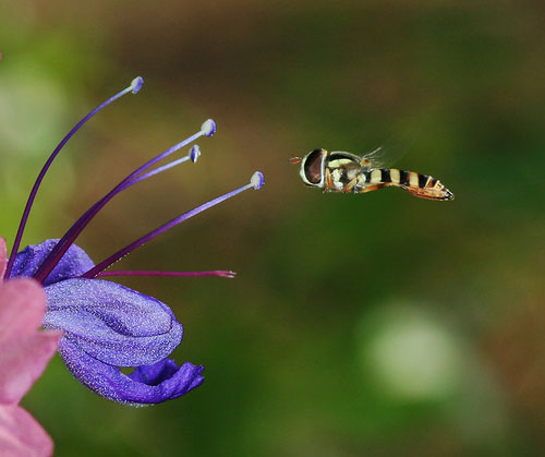 Macro photography tips with example photographs and images