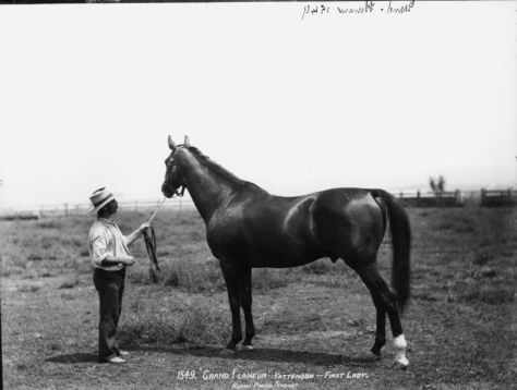 The champion horse after whom Grand Flaneur is named.