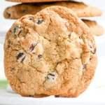 Jumbo Chocolate Chip Walnut Cookies in The Cookie Jar