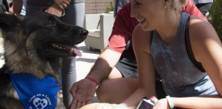 Woman shakes hands with German Shepard